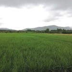 Land for sale –  – Chiang Mai [CH-L-4bdr-1]